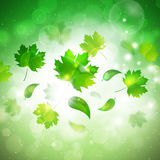 Spring Leaves Abstract Background Stock Photos
