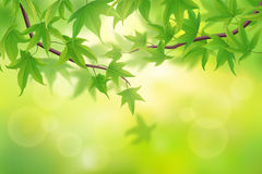 Spring leaves background Stock Image
