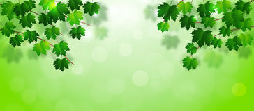 Spring Leaves Banner Royalty Free Stock Image