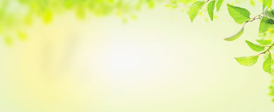 Spring leaves , banner for website Stock Images