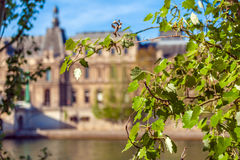 Spring leaves and blurred Louvre Palace, Paris Stock Image