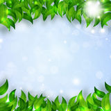 Spring Leaves Bright Background Royalty Free Stock Photo