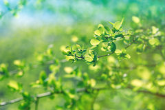 Spring leaves in forest Stock Photography