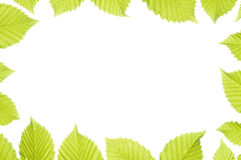 Spring leaves frame Royalty Free Stock Image