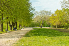 Spring leaves and grass in park with path and bench. Stock Photography