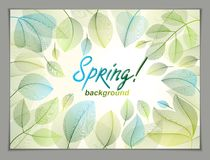 Spring leaves horizontal background, nature seasonal template fo Royalty Free Stock Photos