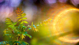 Spring leaves and lens flare. Young green spring leaves, fresh nature background with unique lens flare Stock Photography