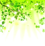 Spring leaves light background Stock Photos