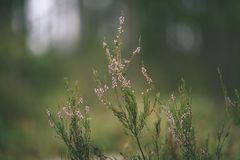Spring leaves lush with blur background - vintage film look. Spring leaves lush with blur background. natural environmental detail view in latvia - vintage film royalty free stock photos