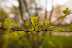 Spring leaves Stock Images
