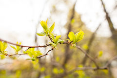 Spring leaves Stock Photos