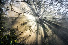 Spring leaves sun and mist Royalty Free Stock Photos