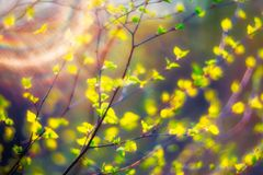 Spring leaves at sunset Royalty Free Stock Images