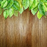Spring leaves on wood background. Watercolor illustration. vector Royalty Free Stock Photo