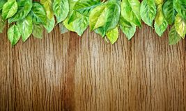 Spring leaves on wood horizontal background. Watercolor illustration. vector Stock Photography