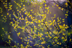 Spring leaves Stock Image