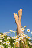 Spring legs Royalty Free Stock Photography