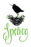 Spring lettering design card with bird Royalty Free Stock Images