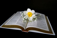 daffodil on open Bible Stock Images