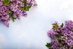 Spring lilac flowers Stock Photos