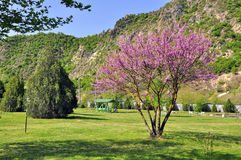 Spring lilac park Royalty Free Stock Images