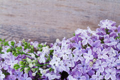 Spring lilac violet flowers Stock Photography