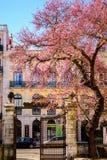 Spring in Lisbon Royalty Free Stock Photos