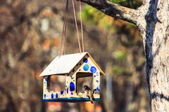 Bird in birdhouse royalty free stock photo