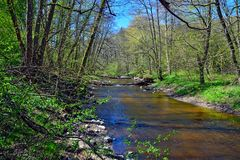 Spring on the little forest river Stock Photos