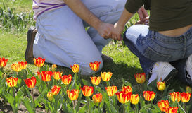 Spring love. A young couple holding hands in a tulips garden Stock Photo