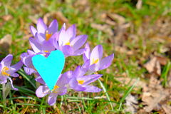Spring love. Heart sitting on spring flowers for your copy - as a concept for love, environmentalism or spring Stock Photos