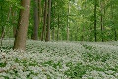 Spring In Lower Saxony Stock Image