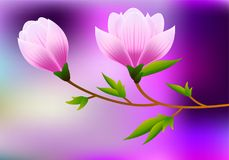 Spring magnolia background with blossom brunch of pink flowers. Illustration Royalty Free Stock Photos