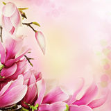 Spring magnolia flowers border stock photo