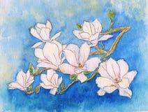 Spring magnolia tree blossoms Royalty Free Stock Photo