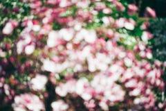 Spring magnolia tree flowers bokeh Stock Photo
