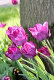 Spring& x27 ; majesté de s Images libres de droits