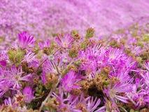 Pink ocean bakeh stock photography