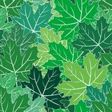Spring maple green leaves seamless vector texture Stock Image