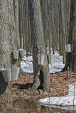 Spring, maple syrup season. Stock Photos