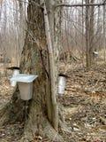 Spring, maple syrup season. Stock Photography