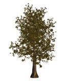 Spring Maple tree Stock Photos