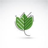 Spring maple tree leaf, botany and eco flat image. Vector illust Stock Image