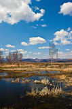 Spring in the marsh edge-2. Royalty Free Stock Photography