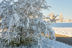 Spring May morning. Spring, a sunny May morning, the night was snowing beautifully snow-covered tree branches, leaves and flowers Royalty Free Stock Photography