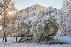 Spring May morning. Spring, a sunny May morning, the night was snowing beautifully snow-covered tree branches, leaves and flowers Royalty Free Stock Images