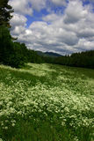 Spring meadow. With flowers and dramatic sky Royalty Free Stock Photography