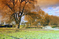 Spring meadow. Green spring meadow with condensation water in the background a large tree Royalty Free Stock Photos