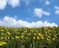 Spring meadow Stock Images