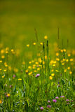 Spring Meadow Royalty Free Stock Photo